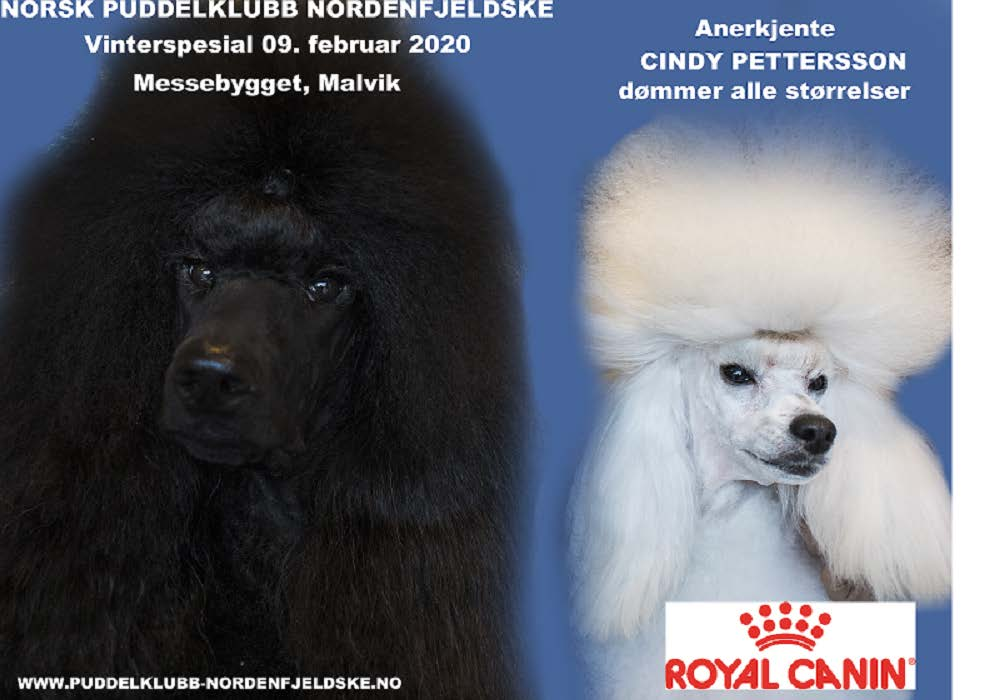 vinterspesial m.royal